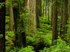 Пазлы онлайн. Картинка №8: Лесной пейзаж . Размер картинки: 640х480