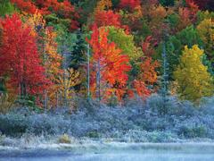 Пазлы онлайн. Картинка №9: Радужная осень . Размер картинки: 640х480