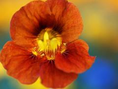 Пазлы онлайн. Картинка №145: Модный цветок . Размер картинки: 640х480