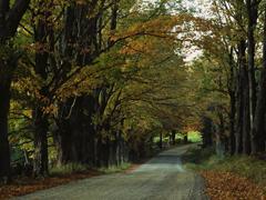 Пазлы онлайн. Картинка №15: Лесная трасса . Размер картинки: 640х480