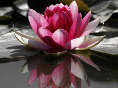 Пазлы онлайн. Картинка №162: Красная лилия . Размер картинки: 640х480
