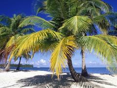 Пазлы онлайн. Картинка №167: Пальмовый пляж . Размер картинки: 640х480