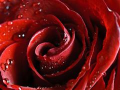 Пазлы онлайн. Картинка №186: Розовая волна . Размер картинки: 640х480