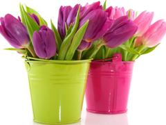 Пазлы онлайн. Картинка №190: Цветы дарим ведрами . Размер картинки: 640х480