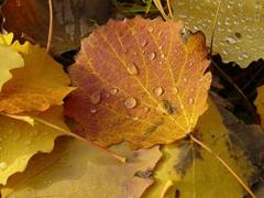 Пазлы онлайн. Картинка №215: Листья падают . Размер картинки: 640х480