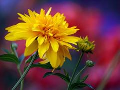 Пазлы онлайн. Картинка №218: Полевое цветение . Размер картинки: 640х480