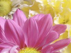 Пазлы онлайн. Картинка №250: Полевое соцветие . Размер картинки: 640х480