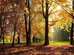 Пазлы онлайн. Картинка №251: Осенняя поляна . Размер картинки: 640х480