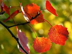 Пазлы онлайн. Картинка №261: Вот и осень наступает . Размер картинки: 640х480