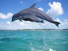 Пазлы онлайн. Картинка №263: Чемпион по прыжкам в воду . Размер картинки: 640х480