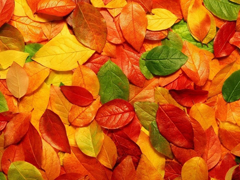 Пазлы онлайн. Картинка №265: Осенний гербарий . Размер картинки: 640х480