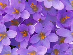 Пазлы онлайн. Картинка №270: Фиолетовый рассвет . Размер картинки: 640х480