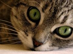 Пазлы онлайн. Картинка №277: Зеленные глаза . Размер картинки: 640х480