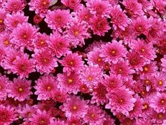 Пазлы онлайн. Картинка №278: Розовое поле . Размер картинки: 640х480