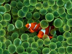 Пазлы онлайн. Картинка №283: Рыбная парочка . Размер картинки: 640х480