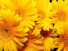 Пазлы онлайн. Картинка №284: Желтоцвет . Размер картинки: 640х480