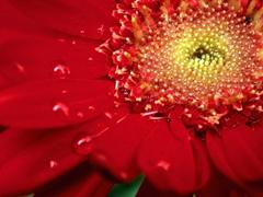 Пазлы онлайн. Картинка №288: Огненный цветок . Размер картинки: 640х480