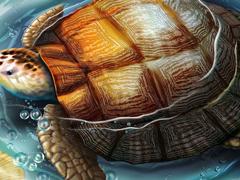 Пазлы онлайн. Картинка №297: Морская черепаха . Размер картинки: 640х480