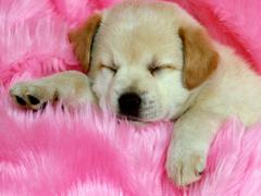 Пазлы онлайн. Картинка №30: Спящая красавица . Размер картинки: 640х480