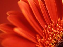 Пазлы онлайн. Картинка №306: Огненное растение . Размер картинки: 640х480