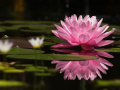 Пазлы онлайн. Картинка №349: Болотный цветок . Размер картинки: 640х480