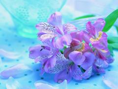 Пазлы онлайн. Картинка №354: Необычные цветы . Размер картинки: 640х480