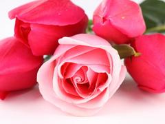 Пазлы онлайн. Картинка №362: Розовый букет . Размер картинки: 640х480