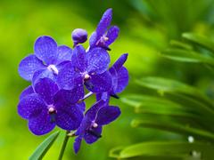 Пазлы онлайн. Картинка №405: Цветочный клубок . Размер картинки: 640х480
