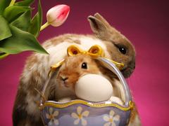 Пазлы онлайн. Картинка №423: Яйцо фаберже . Размер картинки: 640х480