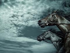 Пазлы онлайн. Картинка №441: Ураганные кони . Размер картинки: 640х480