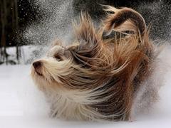 Пазлы онлайн. Картинка №451: Снежная ванна . Размер картинки: 640х480