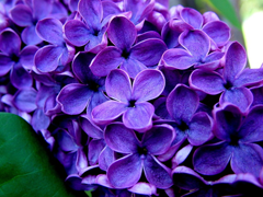 Пазлы онлайн. Картинка №452: Цветочный лампас . Размер картинки: 640х480
