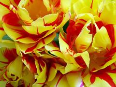Пазлы онлайн. Картинка №46: Голландские цветы . Размер картинки: 640х480