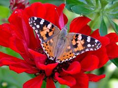 Пазлы онлайн. Картинка №469: Летающая красавица . Размер картинки: 640х480