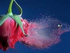 Пазлы онлайн. Картинка №488: Розовая броня . Размер картинки: 640х480