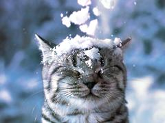 Пазлы онлайн. Картинка №51: Как снег на голову . Размер картинки: 640х480