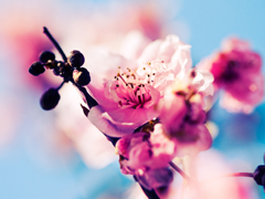 Пазлы онлайн. Картинка №513: Запах весны . Размер картинки: 640х480