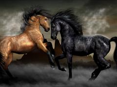Пазлы онлайн. Картинка №52: Лошадиное танго . Размер картинки: 640х480
