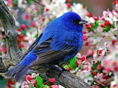 Пазлы онлайн. Картинка №549: Синяя птица . Размер картинки: 640х480