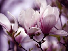Пазлы онлайн. Картинка №550: В саду . Размер картинки: 640х480