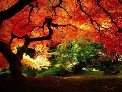 Пазлы онлайн. Картинка №583: Дремучий лес . Размер картинки: 640х480