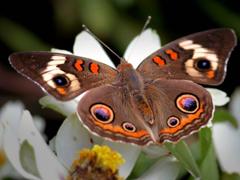Пазлы онлайн. Картинка №591: Бодиарт для бабочек . Размер картинки: 640х480