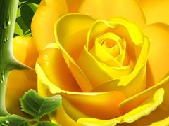 Пазлы онлайн. Картинка №596: Роза и шипы . Размер картинки: 640х480