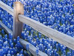 Пазлы онлайн. Картинка №625: Синее поле . Размер картинки: 640х480