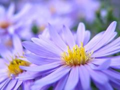 Пазлы онлайн. Картинка №629: Нежный фиолет . Размер картинки: 640х480