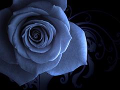 Пазлы онлайн. Картинка №634: Ночная роза . Размер картинки: 640х480