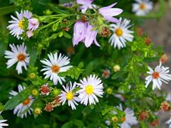 Пазлы онлайн. Картинка №635: Полевые цветы . Размер картинки: 640х480