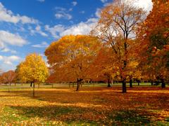 Пазлы онлайн. Картинка №657: Оранжевая осень . Размер картинки: 640х480