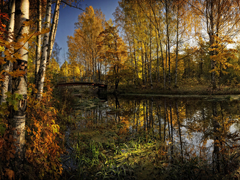 Пазлы онлайн. Картинка №663: Лесная река . Размер картинки: 640х480