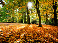 Пазлы онлайн. Картинка №677: Осенний пейзаж . Размер картинки: 640х480